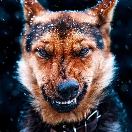 Защита от нападения собаки и правила поведения